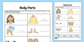 Las partes del cuerpo My Body Parts Worksheet / Worksheet