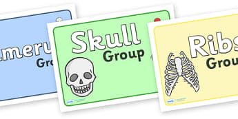 Bones Of The Body Class Group Signs - bones of the body class group signs, bones of the body, bone, bones, class group signs, group signs, group labels, group table signs, table sign, teaching groups, class group, class groups, table label
