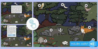 Nocturnal Animals Picture Hotspots - EYFS, Early Years, KS1, Key Stage 1, Twinkl Go, interactive, night, night-time, animals, owl, fox, Twinkl Go, twinkl go, TwinklGo, twinklgo