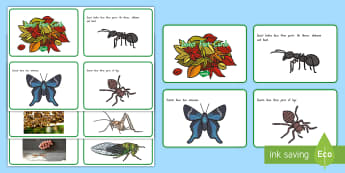 New Zealand Insect Fact Cards - New Zealand, minibeasts, insects, bugs, minibeast, year 1, year 2, year 3, science, nature, living w