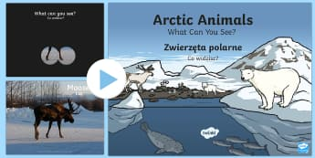 Arctic Animals What Can You See PowerPoint English/Polish - The Arctic, Polar Regions, north pole, south pole, explorers, polar animals, animals, Polish transla