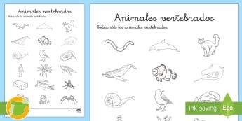Ficha de actividad: Vertebrados o invertebrados - Los seres vivos, La célula, niveles de organización de la vida, clasificación de los seres vivos,