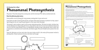 Phenomenal Photosynthesis Activity Sheet - photosynthesis, green plant, tree, energy, reading, label, worksheet