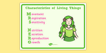 Mrs Nerg Life Processes Display Posters - Mrs Nerg, MRS NERG, life processes, life, process, display, poster, banner, sign, characteristics, living things, live, living, movement, respiration, sensitivity, growth, reproduction, excretion, nutrition,