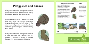 Platypuses and Snakes Information Report Writing Sample - Literacy, Platypuses and Snakes Information Report  Writing Sample, writing sample, writing, english