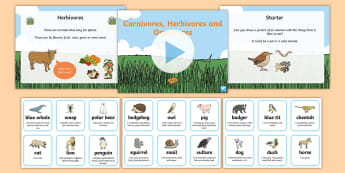Identifying Herbivores Carnivores and Omnivores Powerpoint Task Setter and Activity, carnivoures, herbivores, omnivores