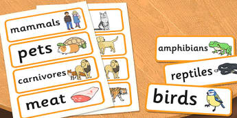 Year 1 Animals Including Humans Scientific Vocabulary Cards