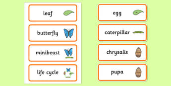 Life Cycle of a Butterfly Word Cards - life cycles, visual aid