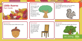 Little Acorns Fact Cards - Twinkl originals, fiction, story, KS1, EYFS, seasons, oak tree, nature, autumn, seasons, oak, growin