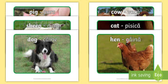 Romanian Translations Requests Display Photos - English/Romanian - the scarecrows wedding, Farm, animals, display photos, cow, pig, dog, photographs, farming, farmyard