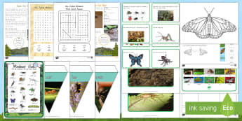 New Zealand Minibeasts  Activity Pack - New Zealand, minibeasts, science, living world, natural world, insects, nature, cicada, weta,