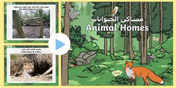 Woodland Animal Habitats PowerPoint Arabic/English - EYFS Owlets, Owl Babies, Martin Waddell,  owl, nature, british, wildlife, nocturnal, night, animals,