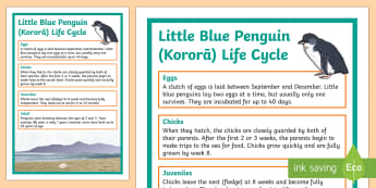 Little Blue Penguin / Kororā Life Cycle Display Poster