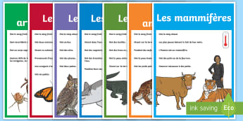 Posters : La classification des animaux - groupes, reigne animal, anthropodes, mammifères, cycle 2, cycle 3,French