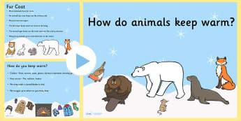 How Do Animals Keep Warm PowerPoint - how do animals keep warm, animal, powerpoint, information powerpoint, discussion prompt, class discussion, discussion