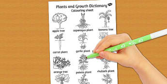 Plants and Growth Dictionary Colouring Sheet - plants, growth