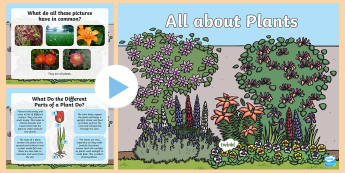 KS1 All About Plants PowerPoint -  Growth, Seed, Flowers, Parts, Roots