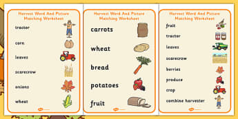 Harvest Word And Picture Matching Worksheet - autumn, seasons