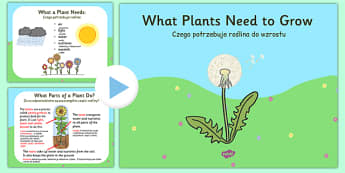 What Plants Need to Grow PowerPoint Polish Translation - polish, plants, living things, what plants need to grow ks2, what do plants need to grow, things plants need to grow, growth