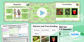 Science: Evolution and Inheritance: Adaptation, Evolution and Human Intervention Year 6 Lesson Pack 6