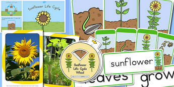Sunflower Life Resource Pack - australia, sunflower, life cycle