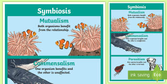 Symbiosis Display Poster - symbiotic relationship, Commensalism, commensal, ACSSU073, mutually beneficial, Mutualism, Parasitis