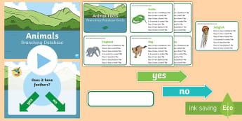 Animals Branching Database Activity Pack - Animation, branching database, interrogate, question, sort, animals, characteristics, identify, info