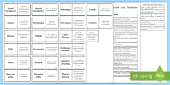 AQA Inheritance, Variation and Evolution Word Loops - Word Loops, inheritance, evolution, variation, Charles Darwin, mitosis, asexual reproduction