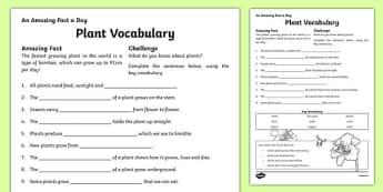 Plant Vocabulary Activity Sheet, worksheet