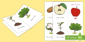 Apple Life Cycle Emergent Reader -  all about apples, apple reading book, apple mini book, apple printable, apple activity