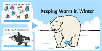 How Animals Keep Warm in Winter PowerPoint - blubber, insulation, migration, hibernation, adaptation, Scottish