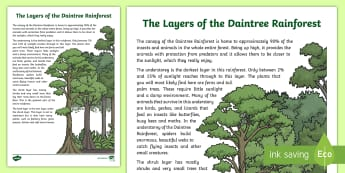 The Layers of the Daintree Rainforest Factual Description Writing Sample - Literacy, The Layers of the Daintree Rainforest Factual Description  Writing Sample , year 3, year 4