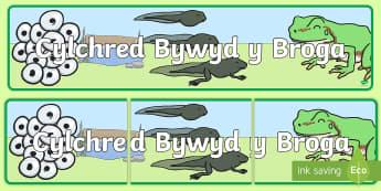 Baner Arddangosfa Cylchred Bywyd y Broga - Cylchred Bywyd y Broga, cylchred bywyd y broga, cylch bywyd broga, broga, frog, frog life cycle, lif