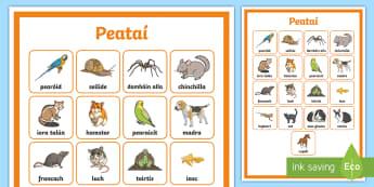 Greille Focal: Peataí - Peataí, pets, cártaí focal, word crads, word grid, greille focal, ainmhithe, animals, Irish