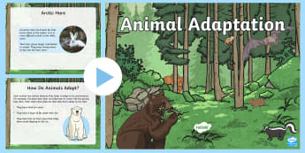 Animal Adaptation PowerPoint - Great Canadian Animals, Canada, animals, adapt, adaptation, features, animal, change, environment