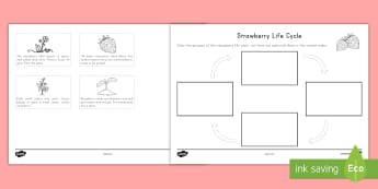 Strawberry Life Cycle Ordering Worksheet / Activity Sheet - strawberries, strawberry plants, strawberry farming, Worksheet, strawberry picking, strawberry plant