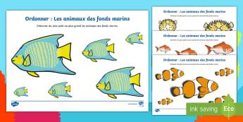 Ordonner : Les animaux des fonds marins - ordonner, petit, moyen, grand, fonds marins, under the sea,  poisson, étoile de mer, pieuvre, numé