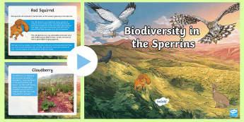 Biodiversity in the Sperrins PowerPoint - wildlife, nature, animals, plants, Northern ireland, habitat