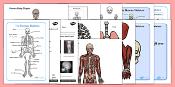 Skeletal System Worksheet resource pack - pack, skeleton