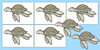 Days of the Week on Turtles - days of the week, days, week, turtles, animals