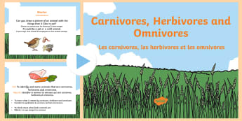 Identifying Herbivores, Carnivores and Omnivores PowerPoint English/French - carnivoures, herbivores, omnivores, teeach, fewer, less, pp, ppt, EAL French,French-translation