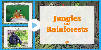 Rainforest PowerPoint KS1 - powerpoint, power point, interactive, powerpoint presentation, jungle and rainforest, habitats, photo powerpoint, jungle powerpoint, rainforest powerpoint, presentation, slide show, slides, discussion aid, dis