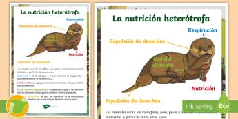 La nutrición heterótrofa Póster DIN A4 - Los seres vivos, La célula, niveles de organización de la vida, clasificación de los seres vivos,