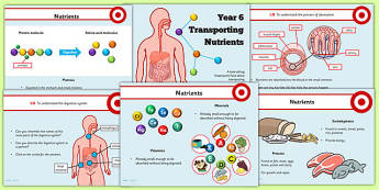 Year 6 Transporting Nutrients Teaching PowerPoint - health, food