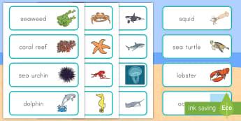 Ocean Word Cards - Habitats, Habitat, Ocean Habitat, Ocean, Beach Habitat, Beach, Ocean word cards, Ocean animal word c