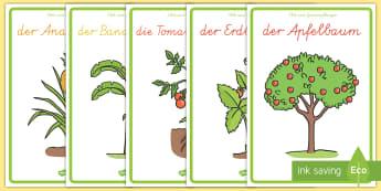Obst- und Gemüsepflanzen Poster für die Klassenraumgestaltung - Obst-und Gemüseposter für die Klassenraumgestaltung, Obst und Gemüse, Obst, Gemüse, Früchte, Ob