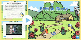 British Birds Video PowerPoint - birds, british birds, british birds powerpoint, birds powerpoint, bird videos, british bird videos, *video* video, robin