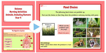 Year 4 Early Morning Activities Animals Including Humans - animal