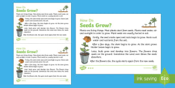 How Do Seeds Grow? Explanation Writing Sample - Literacy, How Do Seeds Grow? Explanation  Writing Sample, literacy, explanations, writing, text type