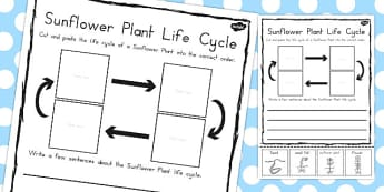Sunflower Plant Life Cycle Sentence Writing Activity - australia, worksheet